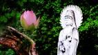 연꽃축제 사진